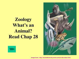 Zoology  What's an  Animal? Read Chap 28