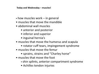 Today and Wednesday – muscles!