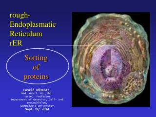 rough-Endoplasmatic Reticulum rER