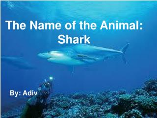 The Name of the Animal: Shark