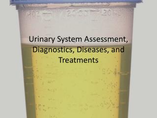 Urinary System Assessment, Diagnostics , Diseases, and   Treatments