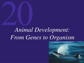 Animal Development: From Genes to Organism