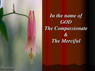 In the name of  GOD  The  Compassionate & The  Merciful