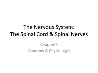The Nervous System:  The Spinal Cord & Spinal Nerves