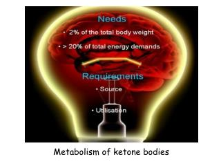 Metabolism of keton ? bodies