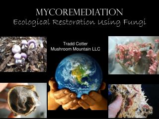 MYCOREMEDIATION Ecological Restoration Using Fungi