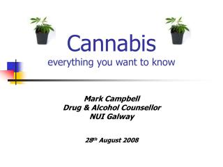 Cannabis everything you want to know