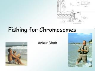 Fishing for Chromosomes