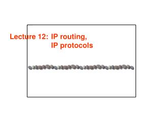 Lecture 12:	IP routing,  IP protocols