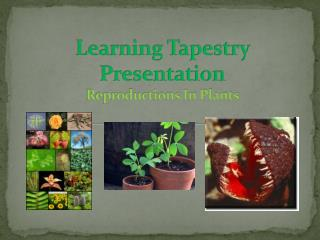 Learning Tapestry Presentation Reproductions In Plants