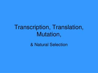 Transcription, Translation,  Mutation,