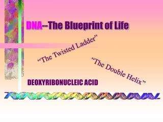 DNA --The Blueprint of Life