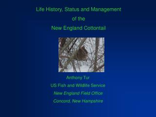 Life History, Status and Management of the New England Cottontail