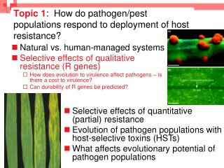 Topic 1 :  How do pathogen/pest populations respond to deployment of host resistance?