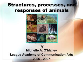 Structures, processes, and responses of animals