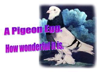 A Pigeon Egg,