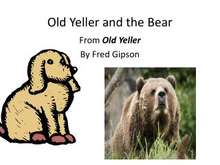 Old Yeller and the Bear