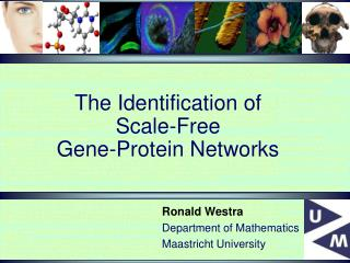 The Identification of  Scale-Free  Gene-Protein Networks