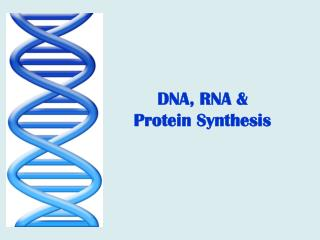 DNA, RNA &  Protein Synthesis