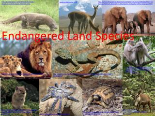 Endangered Land Species