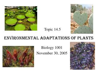 Environmental Adaptations of Plants