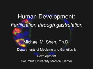 Human Development: Fertilization through gastrulation