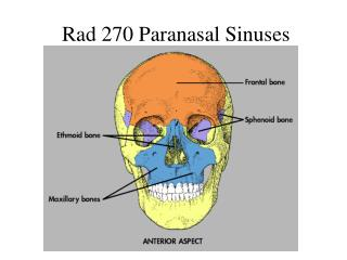 Rad 270 Paranasal Sinuses
