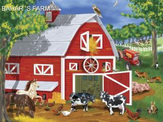 BAHAR 'S FARM
