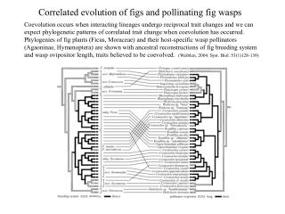 Correlated evolution of figs and pollinating fig wasps