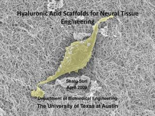 Hyaluronic Acid Scaffolds for  Neural Tissue Engineering