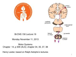 Bi/CNS 150 Lecture 19       Monday November 11, 2013 Motor Systems
