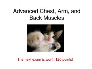 Advanced Chest, Arm, and Back Muscles