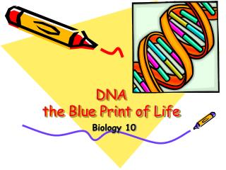 DNA the Blue Print of Life