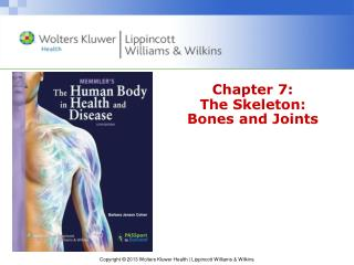 Chapter 7: The Skeleton:     Bones and Joints
