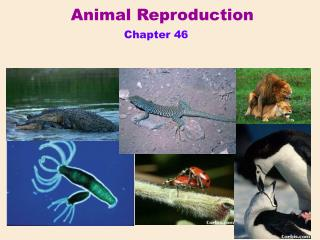Animal Reproduction