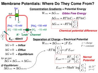Membrane Potentials: Where Do They Come From?