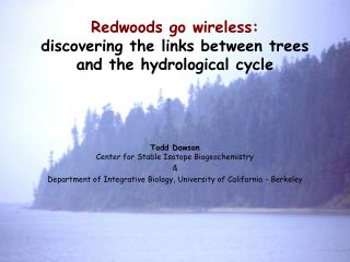 Redwoods go wireless: discovering the links between trees and the hydrological cycle