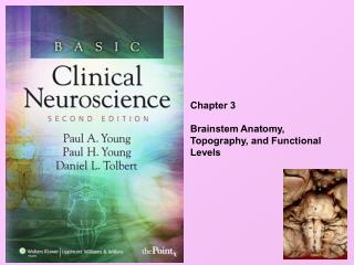 Chapter 3 Brainstem Anatomy,  Topography, and Functional Levels