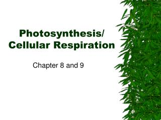 Photosynthesis/  Cellular Respiration