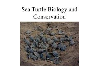 Sea Turtle Biology and Conservation