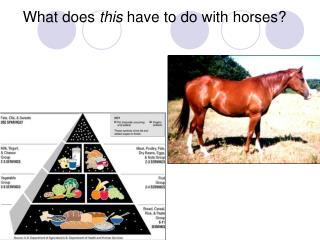What does  this  have to do with horses?