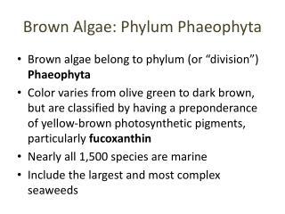 Brown Algae: Phylum  Phaeophyta