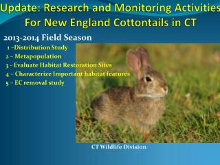 Update: Research and Monitoring Activities For New England Cottontails in CT