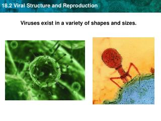 Viruses exist in a variety of shapes and sizes.