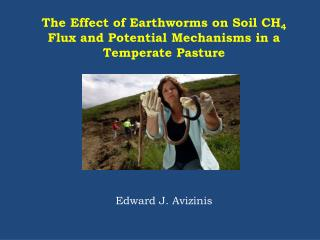 The Effect of Earthworms on Soil CH 4  Flux and Potential Mechanisms in a Temperate Pasture
