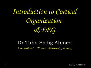 Introduction to Cortical Organization  & EEG