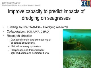 Improve capacity to predict impacts of dredging on seagrasses