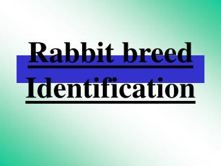 Rabbit breed Identification