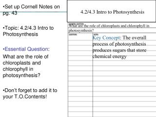 Set up Cornell Notes on pg. 43 Topic: 4.2/4.3 Intro to Photosynthesis Essential Question :