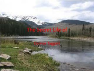 The Secret Life of